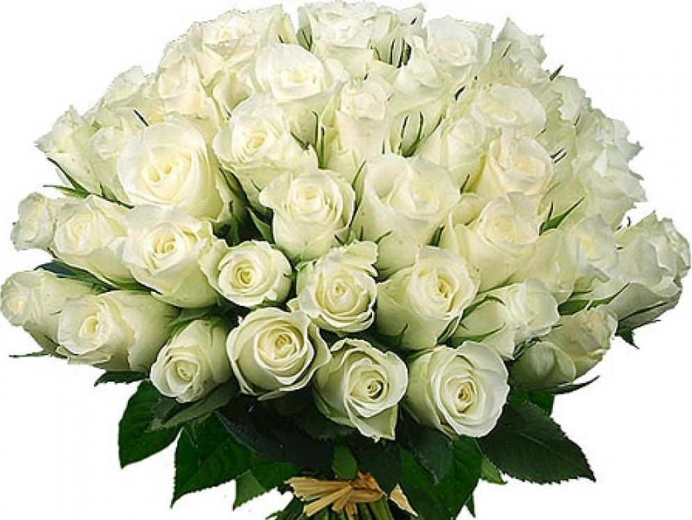 Смешные, картинки белых роз с днем рождения женщине